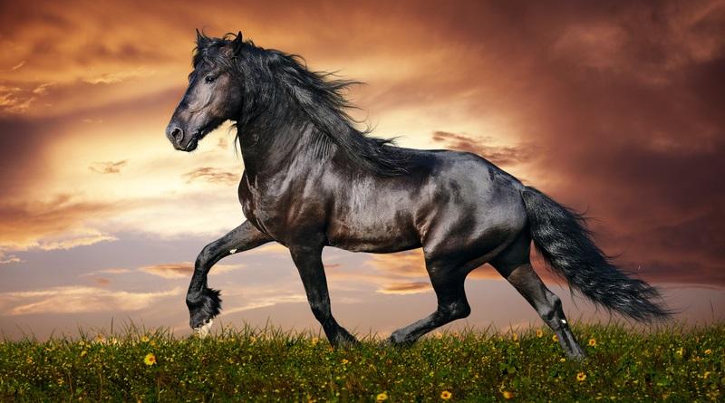 Задача о шахматном коне